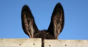 orelhas-de-burro1